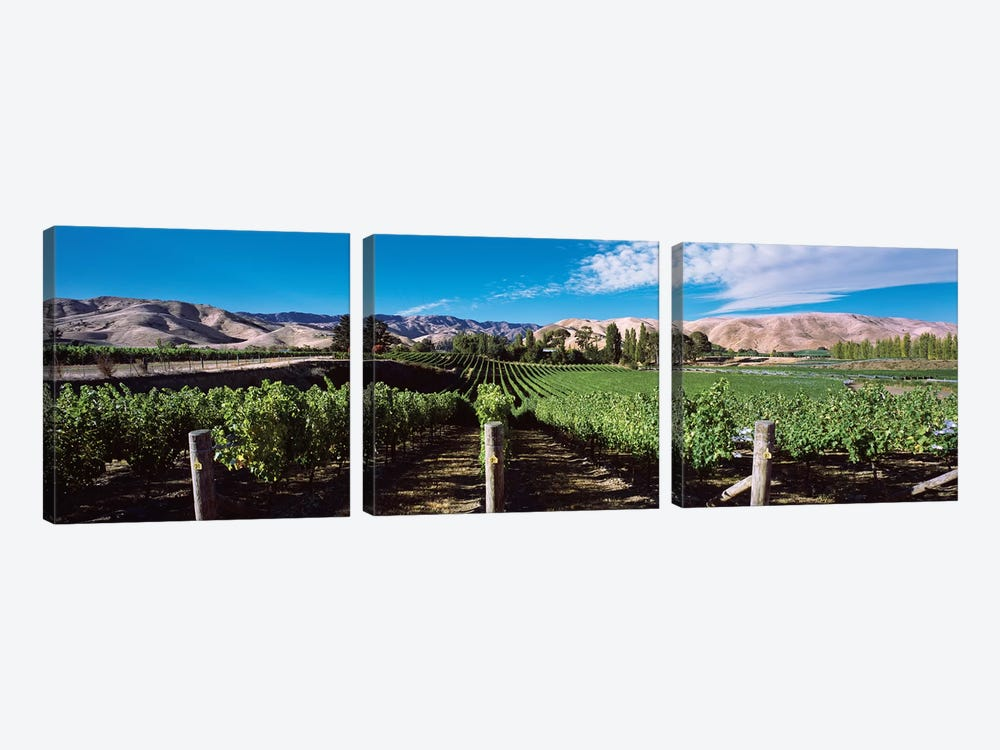 Vineyard, Marlborough Region, South Island, New Zealand by Panoramic Images 3-piece Canvas Artwork