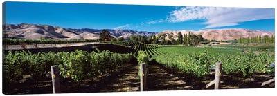 Vineyard, Marlborough Region, South Island, New Zealand Canvas Art Print