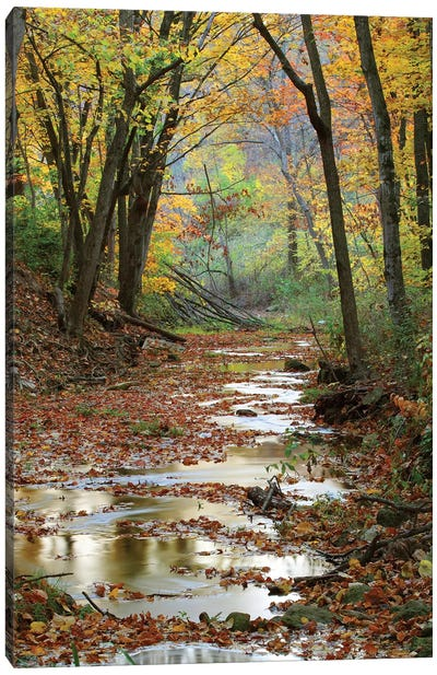 Autumn Landscape, Schuster Hollow, Grant County, Wisconsin, USA Canvas Art Print