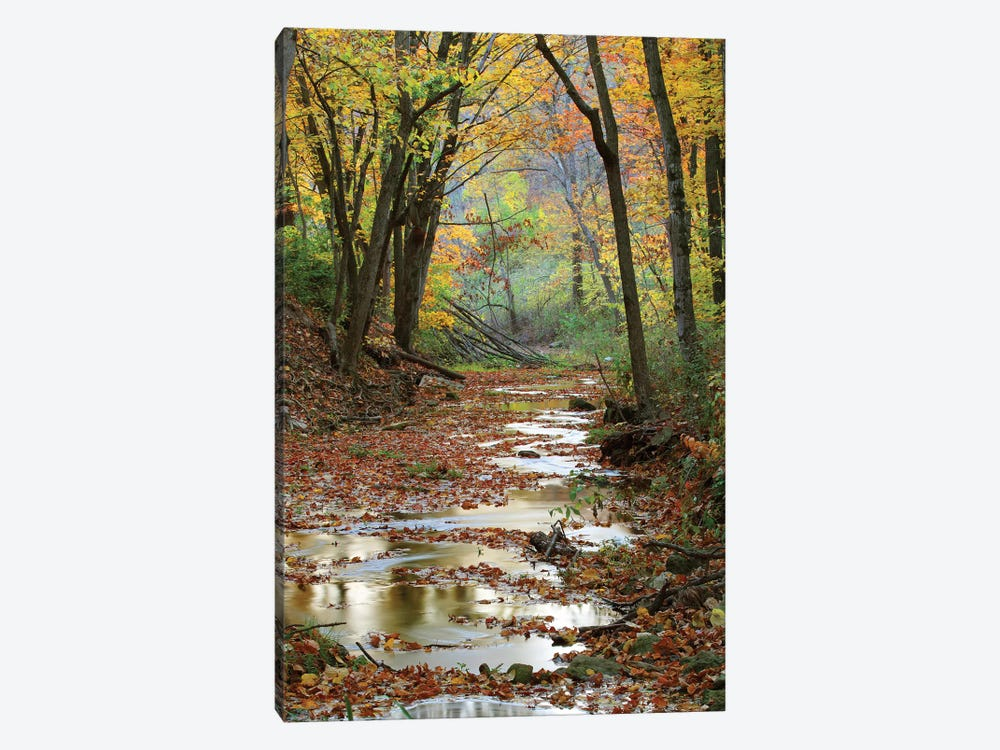 Autumn Landscape, Schuster Hollow, Grant County, Wisconsin, USA by Panoramic Images 1-piece Canvas Wall Art