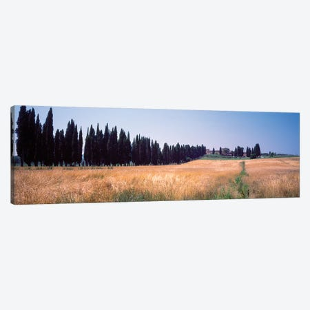 Countryside Landscape II, Torrita di Siena, Siena Province, Tuscany Region, Italy Canvas Print #PIM14199} by Panoramic Images Canvas Art Print