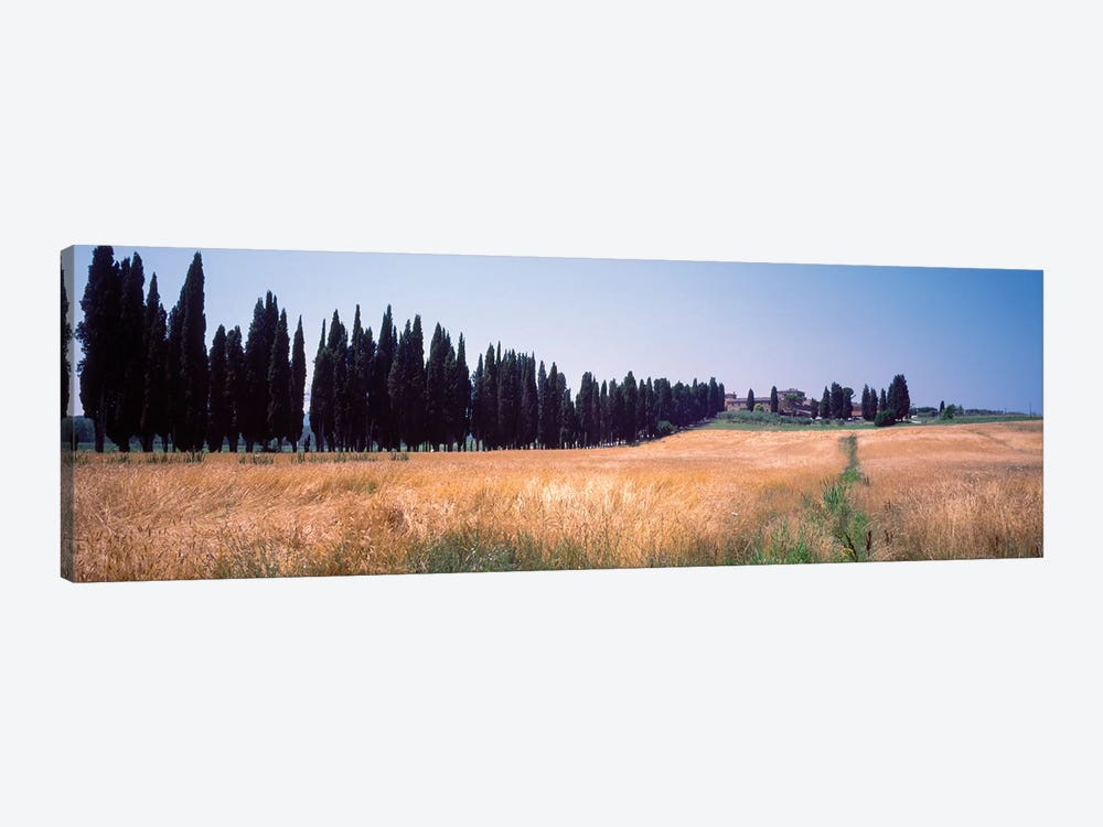 Countryside Landscape II, Torrita di Siena, Siena Province, Tuscany Region, Italy by Panoramic Images 1-piece Canvas Art Print