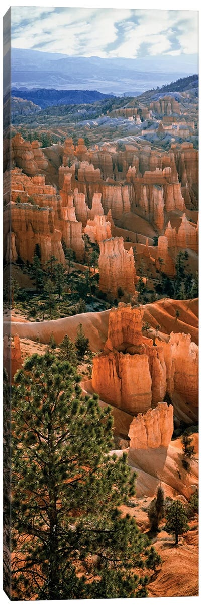 Hoodoos, Bryce Canyon Amphitheater, Bryce Canyon National Park, Utah, USA Canvas Art Print