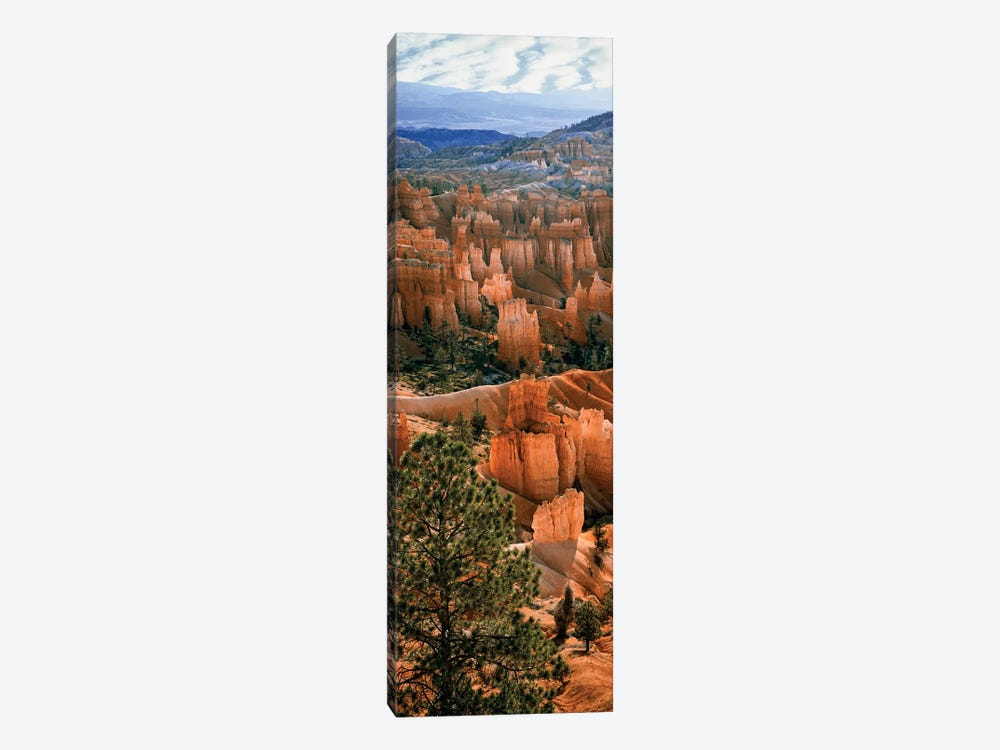 Hoodoos, Bryce Canyon Amphitheater, Bryce Canyon National Park, Utah, USA by Panoramic Images 1-piece Canvas Print