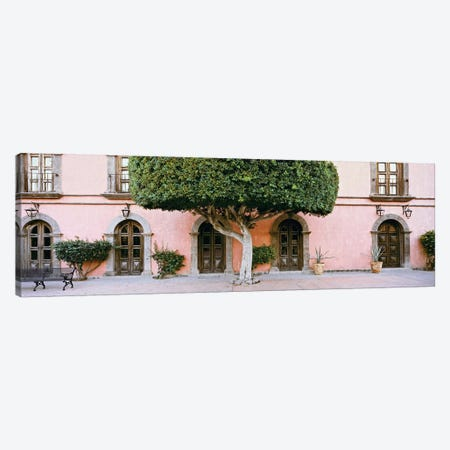 Indian Laurel Tree, Posada de las Flores Hotel, Loreto, Baja California Sur, Mexico Canvas Print #PIM14203} by Panoramic Images Canvas Print