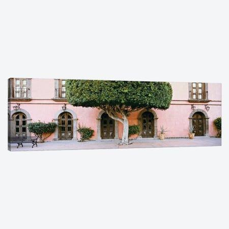 Indian Laurel Tree, Posada de las Flores Hotel, Loreto, Baja California Sur, Mexico Canvas Print #PIM14203} by Panoramic Images Canvas Print
