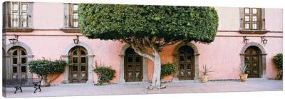 Indian Laurel Tree, Posada de las Flores Hotel, Loreto, Baja California Sur, Mexico Canvas Art Print