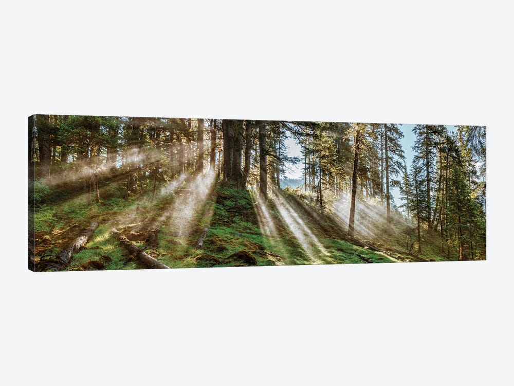 Forest Landscape, Alaska, USA by Panoramic Images 1-piece Canvas Artwork