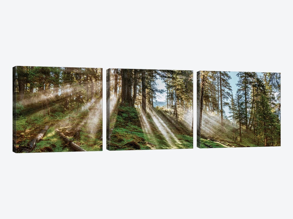 Forest Landscape, Alaska, USA by Panoramic Images 3-piece Canvas Wall Art