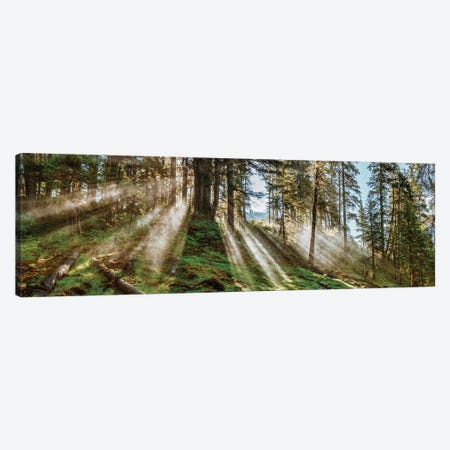 Forest Landscape, Alaska, USA Canvas Print #PIM14205} by Panoramic Images Canvas Wall Art