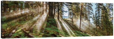 Forest Landscape, Alaska, USA Canvas Art Print