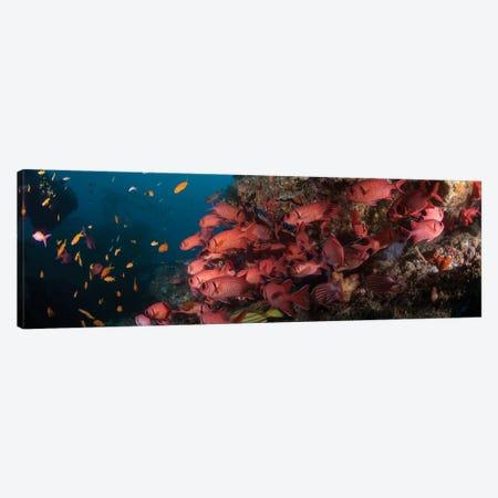 Schooling Blotcheye Soldierfish, Sodwana Bay, KwaZulu-Natal Province, South Africa Canvas Print #PIM14218} by Panoramic Images Canvas Art