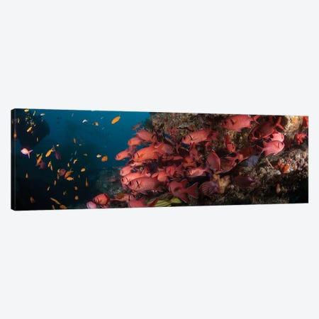 Schooling Blotcheye Soldierfish, Sodwana Bay, KwaZulu-Natal Province, South Africa Canvas Print #PIM14218} by Panoramic Images Canvas Art