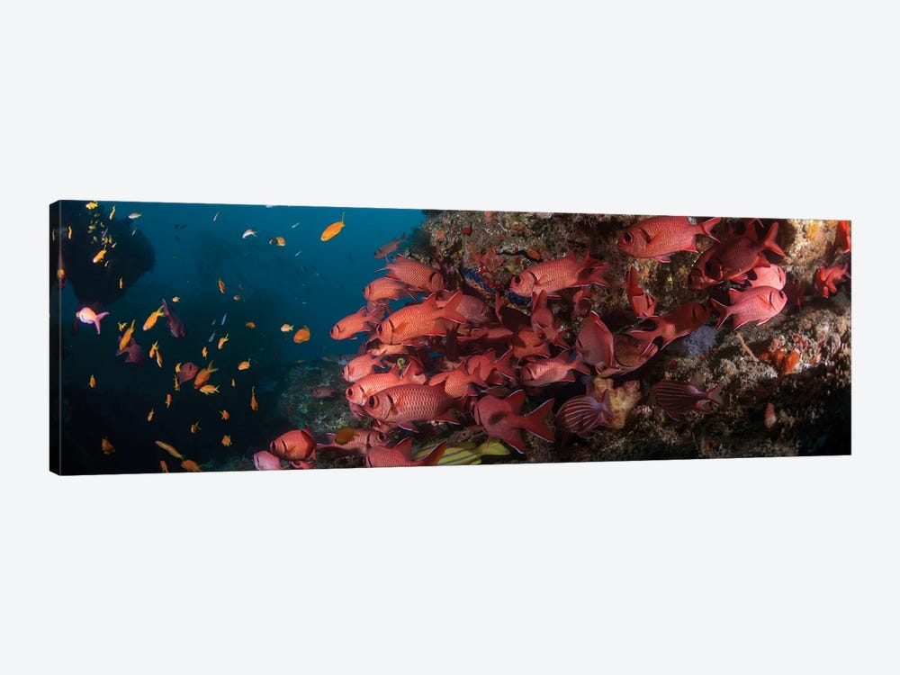 Schooling Blotcheye Soldierfish, Sodwana Bay, KwaZulu-Natal Province, South Africa by Panoramic Images 1-piece Canvas Artwork