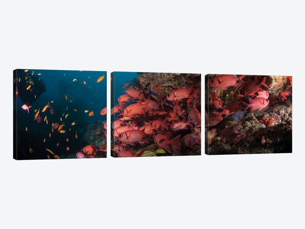 Schooling Blotcheye Soldierfish, Sodwana Bay, KwaZulu-Natal Province, South Africa by Panoramic Images 3-piece Canvas Art
