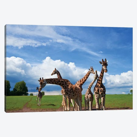Tower Of Giraffes, Fota Wildlife Park, Fota Island, County Cork, Ireland Canvas Print #PIM14220} by Panoramic Images Art Print