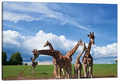 Tower Of Giraffes, Fota Wildlife Park, Fota Island, County Cork, Ireland Canvas Print #PIM14220