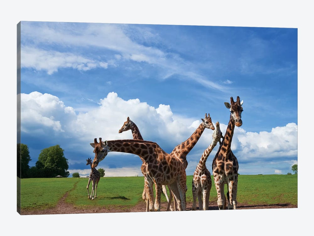 Tower Of Giraffes, Fota Wildlife Park, Fota Island, County Cork, Ireland by Panoramic Images 1-piece Canvas Art Print