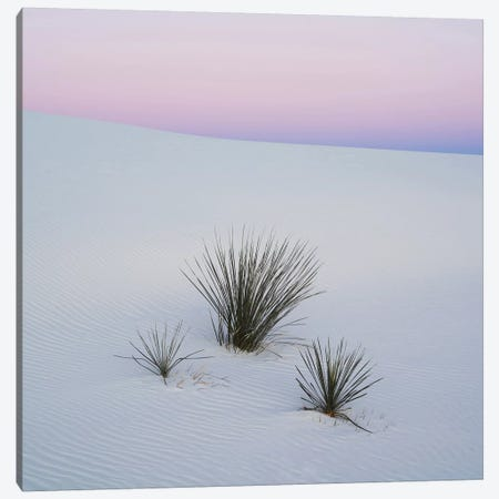 Soaptree Yucca I, White Sands National Monument, New Mexico, USA Canvas Print #PIM14221} by Panoramic Images Art Print