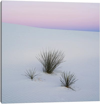 Soaptree Yucca I, White Sands National Monument, New Mexico, USA Canvas Art Print