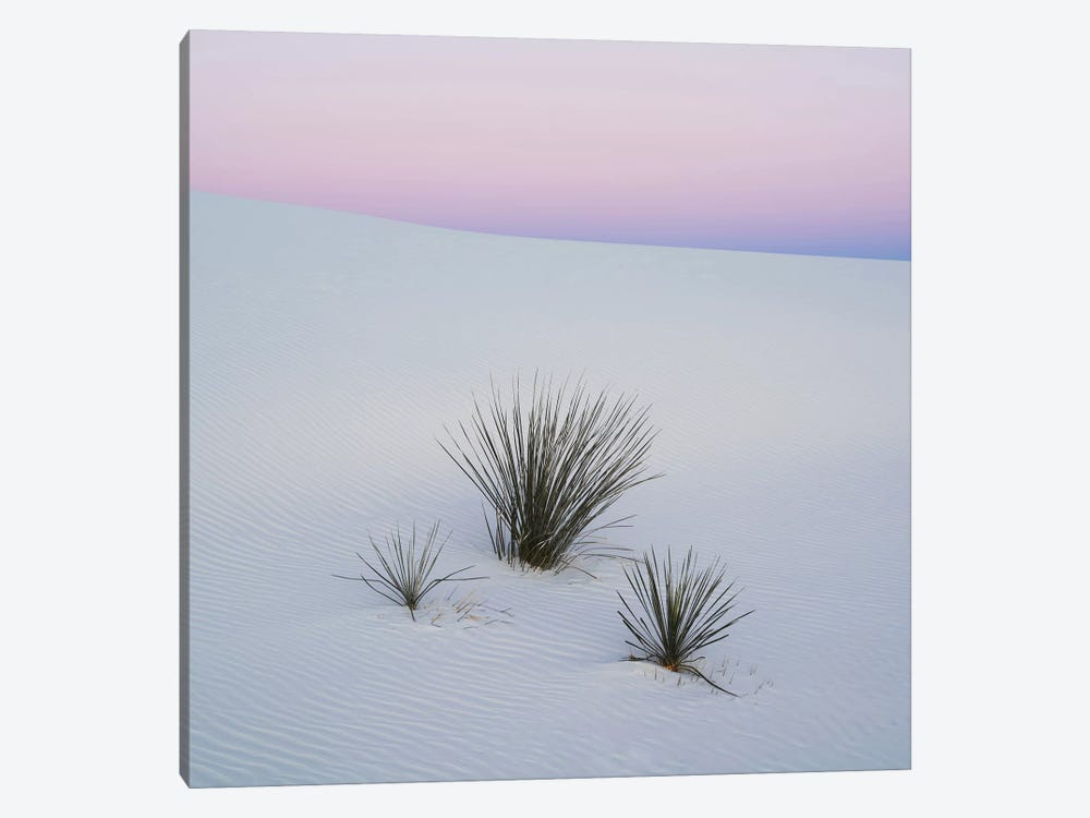 Soaptree Yucca I, White Sands National Monument, New Mexico, USA by Panoramic Images 1-piece Canvas Artwork