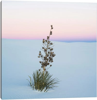 Soaptree Yucca II, White Sands National Monument, New Mexico, USA Canvas Art Print