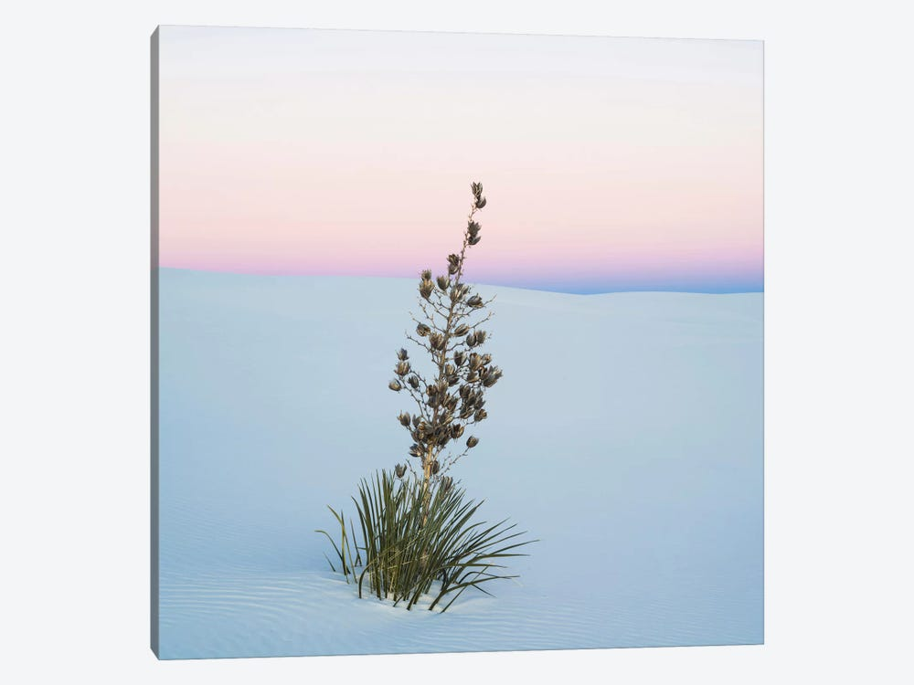 Soaptree Yucca II, White Sands National Monument, New Mexico, USA by Panoramic Images 1-piece Art Print