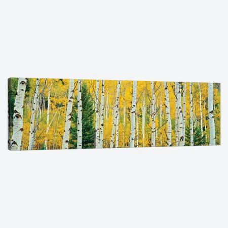 Aspen Grove, Granite Canyon Trail, Grand Teton National Park, Jackson Hole Valley, Teton County, Wyoming, USA Canvas Print #PIM14230} by Panoramic Images Canvas Wall Art