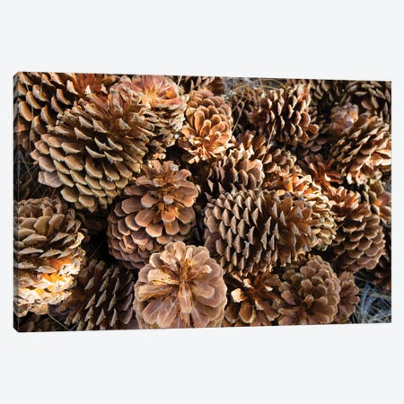 Acorns Growing On Plants Canvas Print #PIM14235} by Panoramic Images Canvas Print