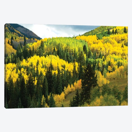 Aspen Trees In A Forest, Maroon Bells, Maroon Creek Valley, Aspen, Pitkin County, Colorado, USA IV Canvas Print #PIM14259} by Panoramic Images Canvas Wall Art
