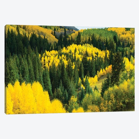 Aspen Trees In A Forest, Maroon Bells, Maroon Creek Valley, Aspen, Pitkin County, Colorado, USA V Canvas Print #PIM14260} by Panoramic Images Canvas Art Print