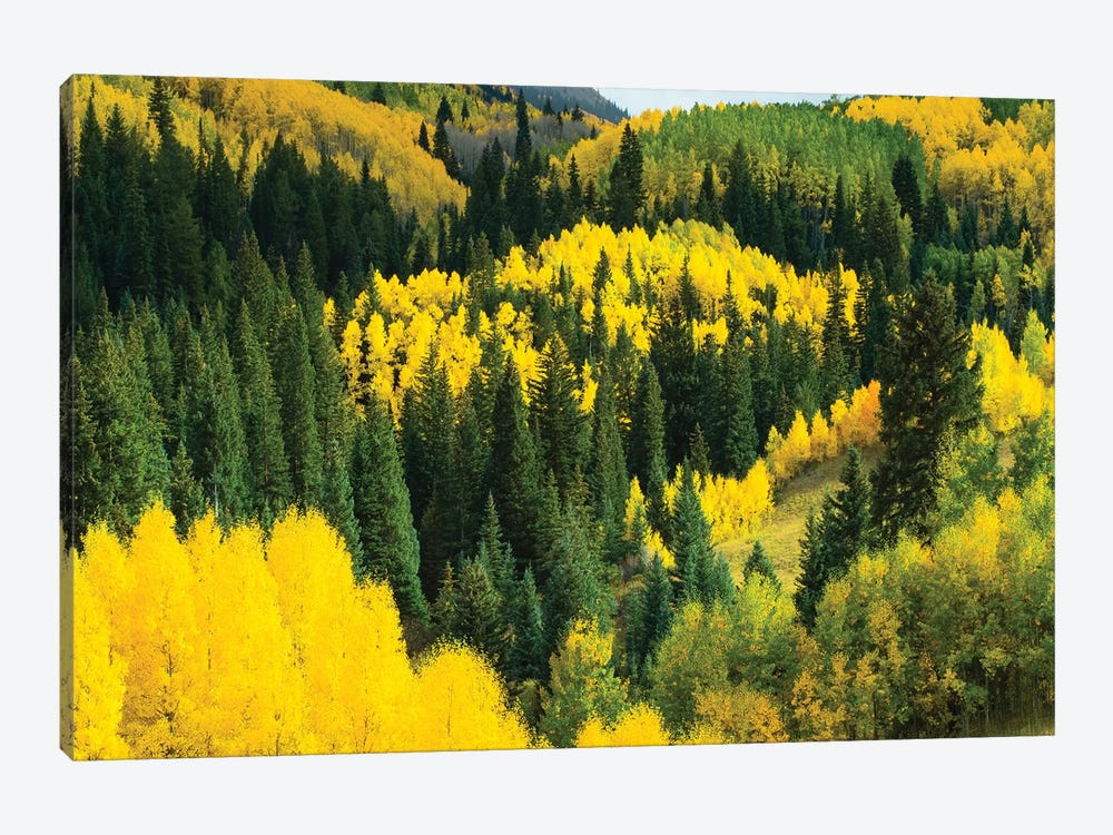 Aspen Trees In A Forest, Maroon Bells, Maroon Creek Valley, Aspen, Pitkin County, Colorado, USA V by Panoramic Images 1-piece Art Print