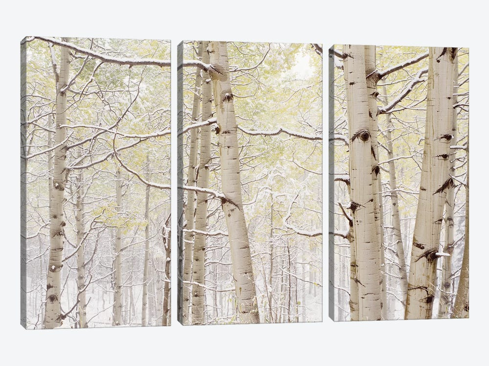 Autumn Aspens With Snow, Colorado, USA by Panoramic Images 3-piece Art Print