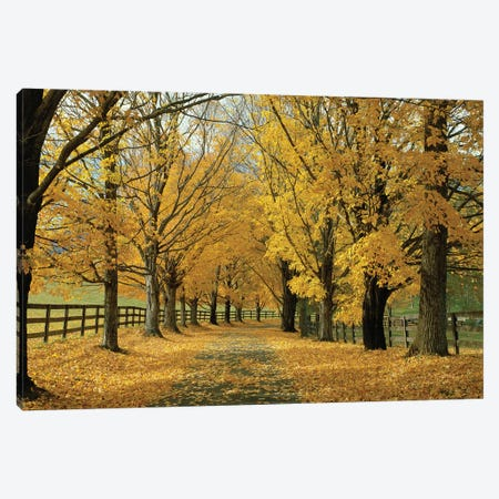 Autumn Trees Near Waynesboro, Virginia, USA Canvas Print #PIM14268} by Panoramic Images Canvas Art Print