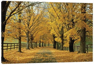 Autumn Trees Near Waynesboro, Virginia, USA Canvas Art Print