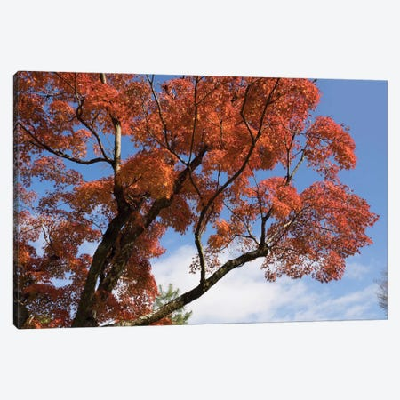 Autumnal Trees At Katsura Imperial Garden, Kyoti Prefecture, Japan Canvas Print #PIM14272} by Panoramic Images Canvas Art
