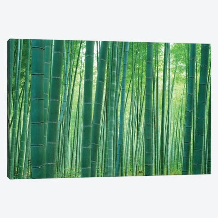 Bamboo Forest, Sagano, Kyoto, Japan Canvas Print #PIM14275} by Panoramic Images Canvas Print
