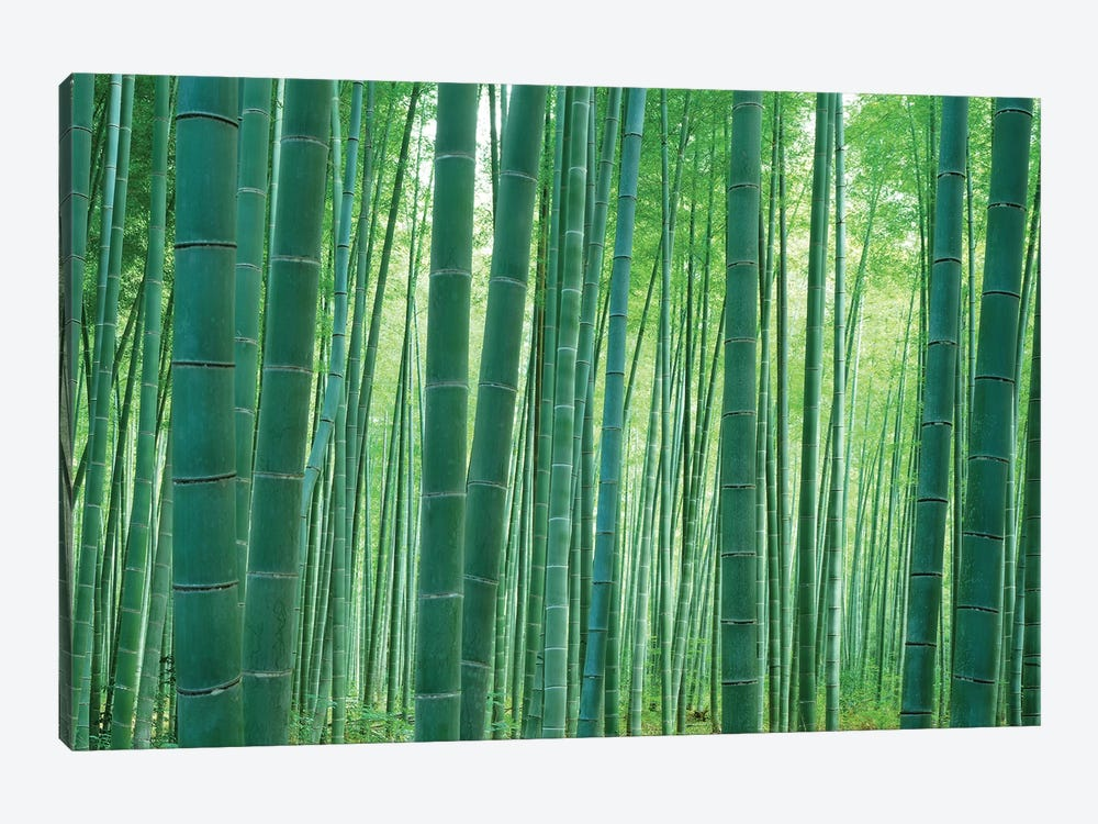 Bamboo Forest, Sagano, Kyoto, Japan by Panoramic Images 1-piece Canvas Art Print