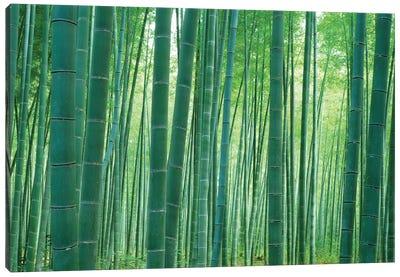 Bamboo Forest, Sagano, Kyoto, Japan Canvas Art Print