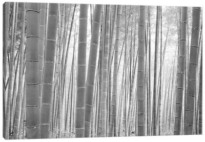 Bamboo Forest, Sagano, Kyoto, Japan (Black And White) I Canvas Art Print
