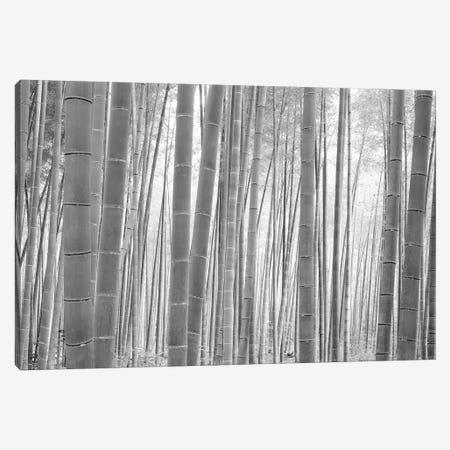 Bamboo Forest, Sagano, Kyoto, Japan (Black And White) I 3-Piece Canvas #PIM14276} by Panoramic Images Canvas Art Print