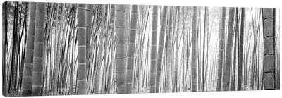 Bamboo Forest, Sagano, Kyoto, Japan (Black And White) II Canvas Art Print