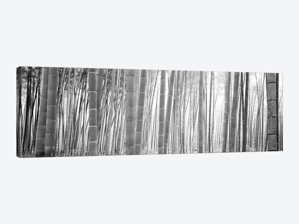 Bamboo Forest, Sagano, Kyoto, Japan (Black And White) II by Panoramic Images 1-piece Canvas Print