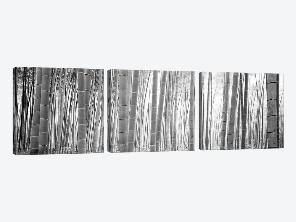 Bamboo Forest, Sagano, Kyoto, Japan (Black And White) II by Panoramic Images 3-piece Canvas Print