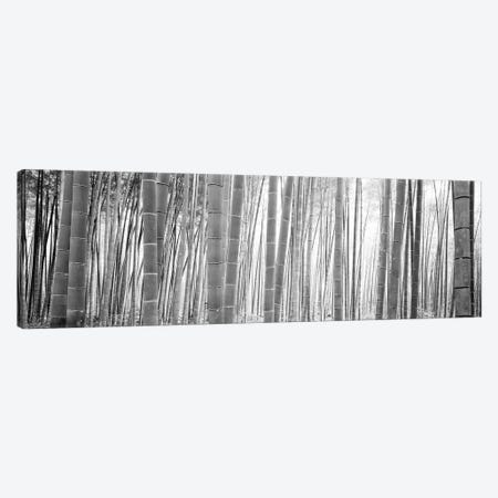 Bamboo Forest, Sagano, Kyoto, Japan (Black And White) II 3-Piece Canvas #PIM14277} by Panoramic Images Canvas Art Print