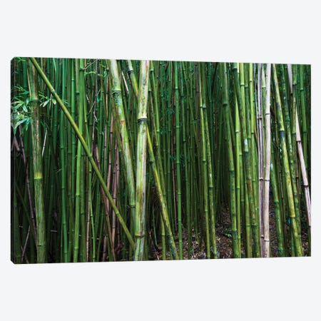 Bamboo Trees, Maui, Hawaii, USA I Canvas Print #PIM14278} by Panoramic Images Canvas Art