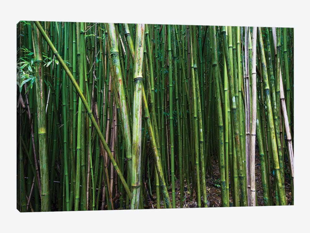 Bamboo Trees, Maui, Hawaii, USA I by Panoramic Images 1-piece Canvas Artwork