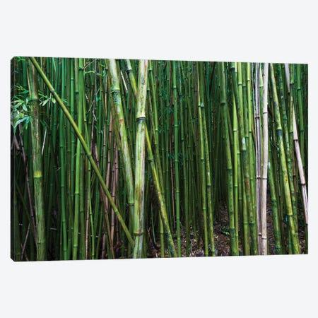 Bamboo Trees, Maui, Hawaii, USA I Canvas Print #PIM14278} by Panoramic Images Canvas Art