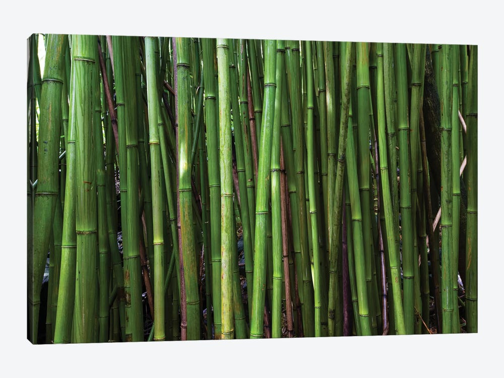 Bamboo Trees, Maui, Hawaii, USA II by Panoramic Images 1-piece Canvas Print