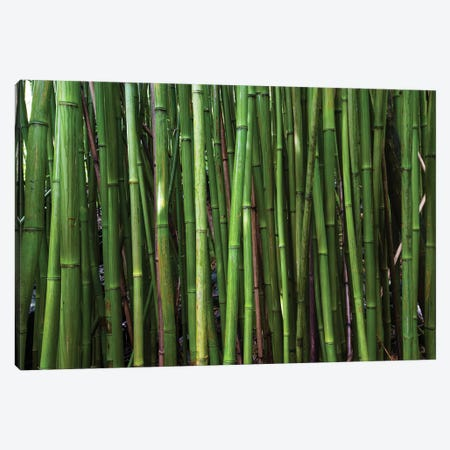 Bamboo Trees, Maui, Hawaii, USA II Canvas Print #PIM14279} by Panoramic Images Canvas Artwork